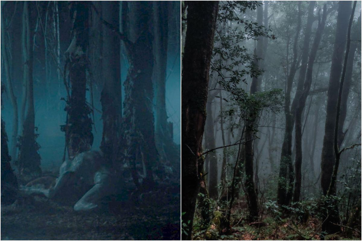 El bosque oscuro y tenebroso del Mundo al Revés. A la dcha, la laurisilva de la Gomera. Fotos: D.R / Hugo Palotto.