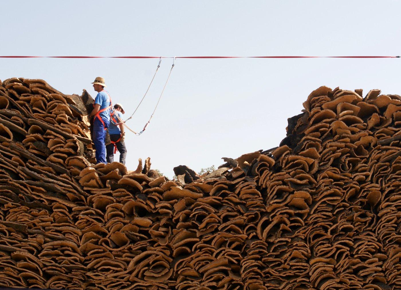 Descorche alcornoques: planchas de corcho (2)
