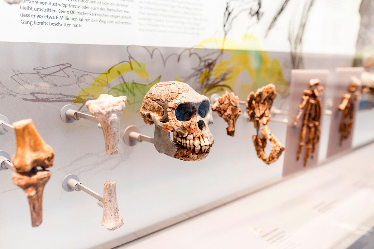 Museo de la Evolución Humana. Burgos. Shutterstock