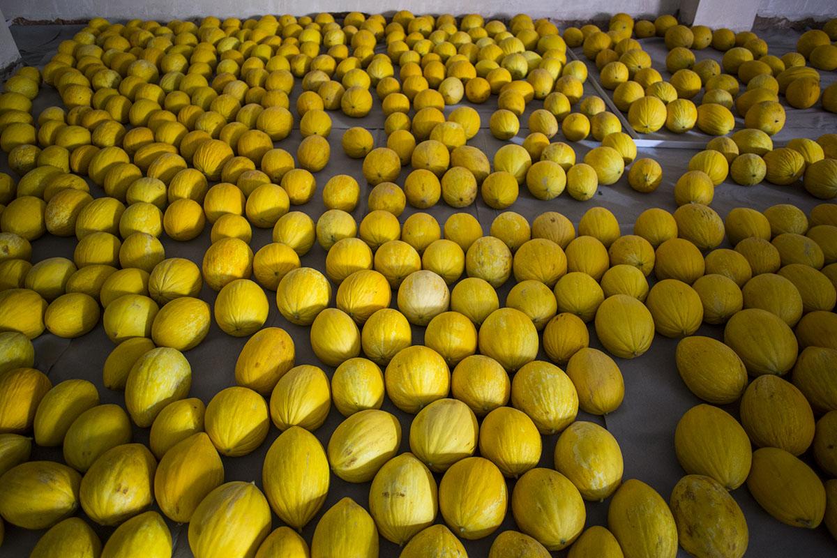 La producción anual ha subido de los 2.000 kg el primer año a los actuales 8.000 kg.
