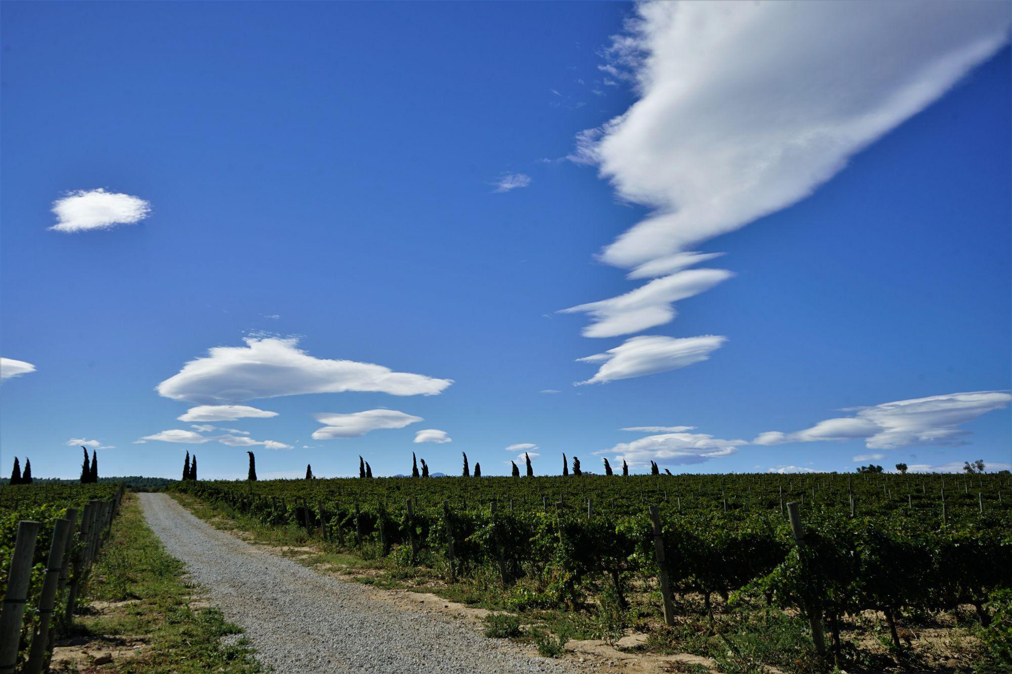Rodeados de viñedos y de 'cellers' comenzamos la primera de las rutas.