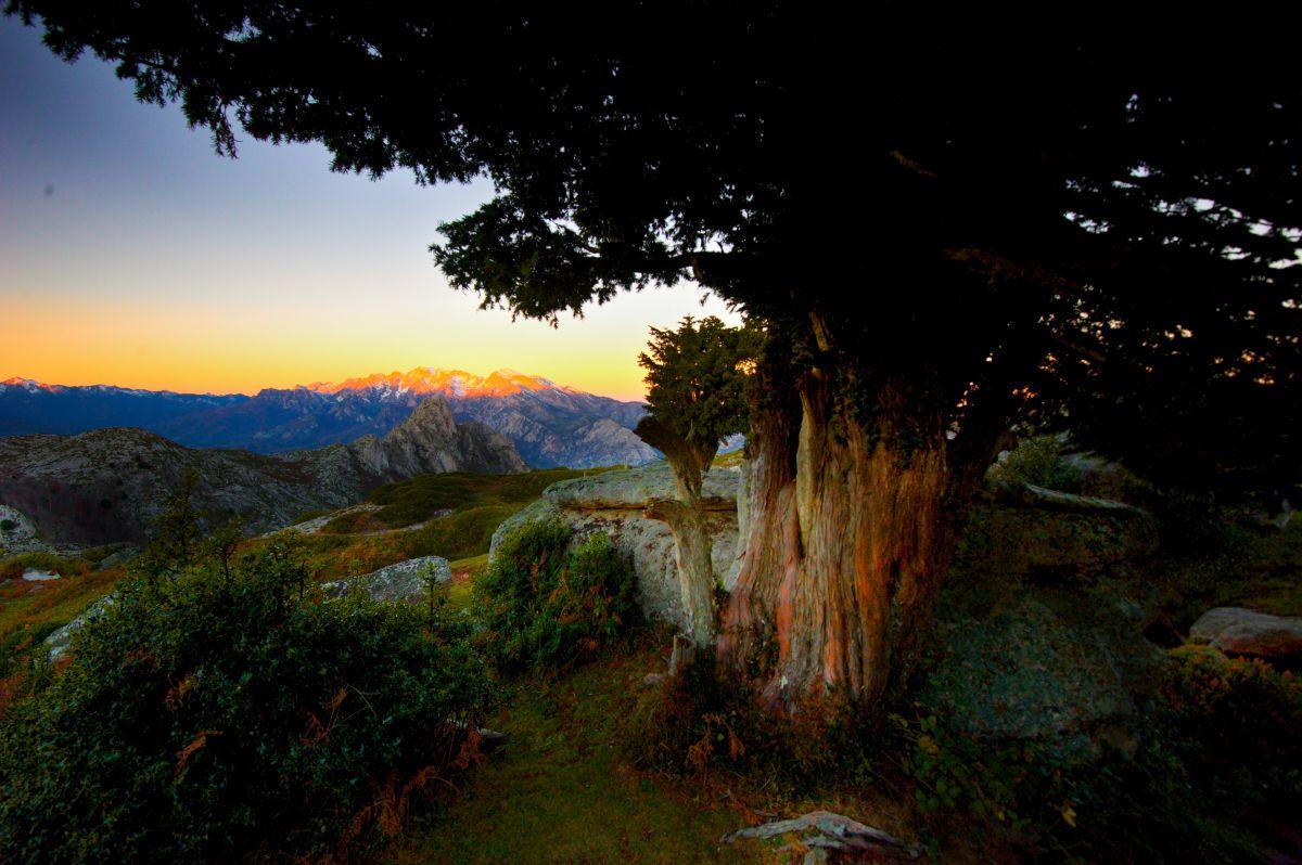 Un amanecer entre tejos con la vista del sol saliendo al fondo, en la Braña de los Tejos, Cantabria.