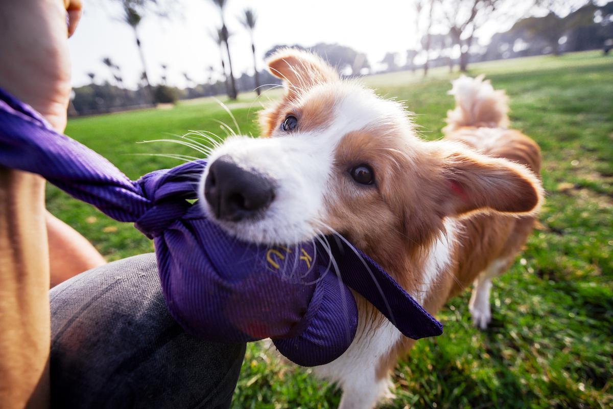 Jugando con mi perro