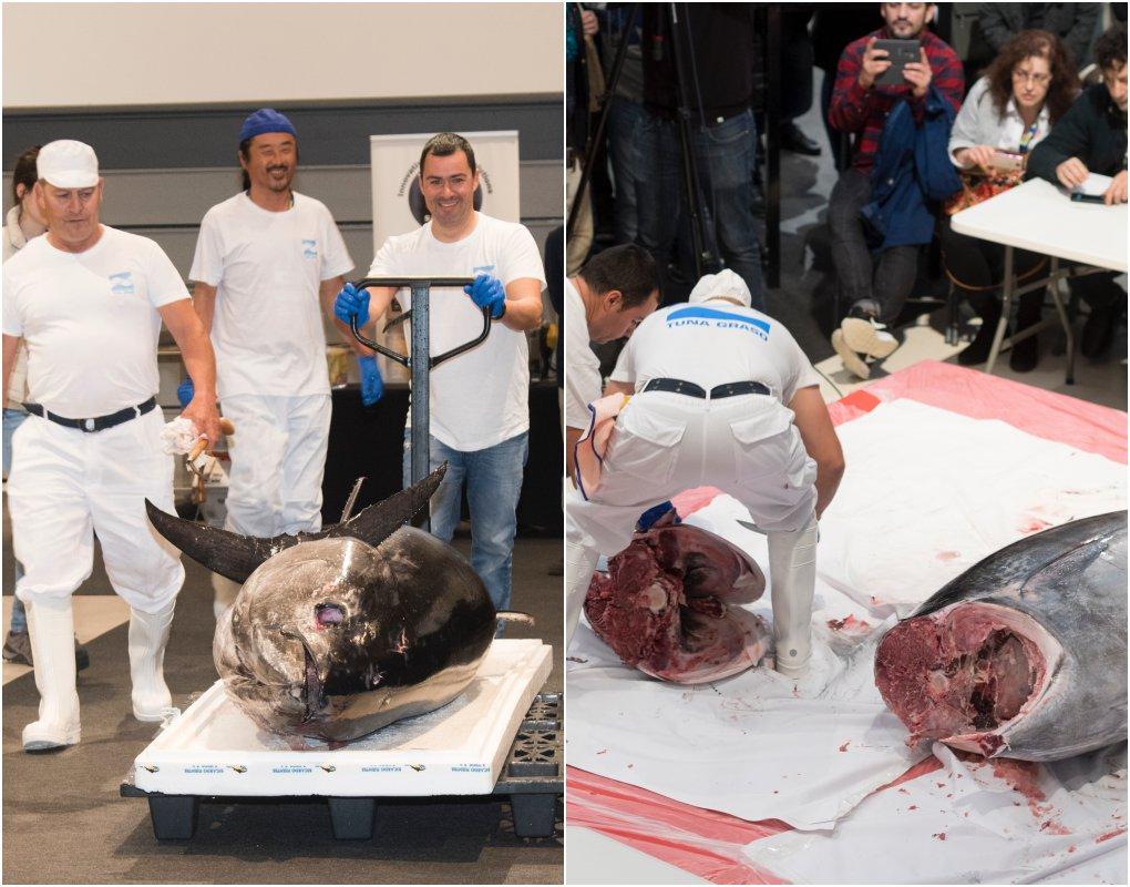 El atún rondaba los 260 kg y fue diseccionado delante del público vitoriano. Foto cedida.