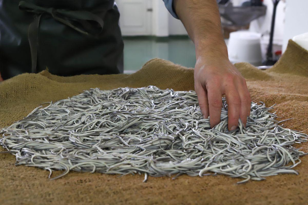 Las angulas se dejan secar una vez hervidas.