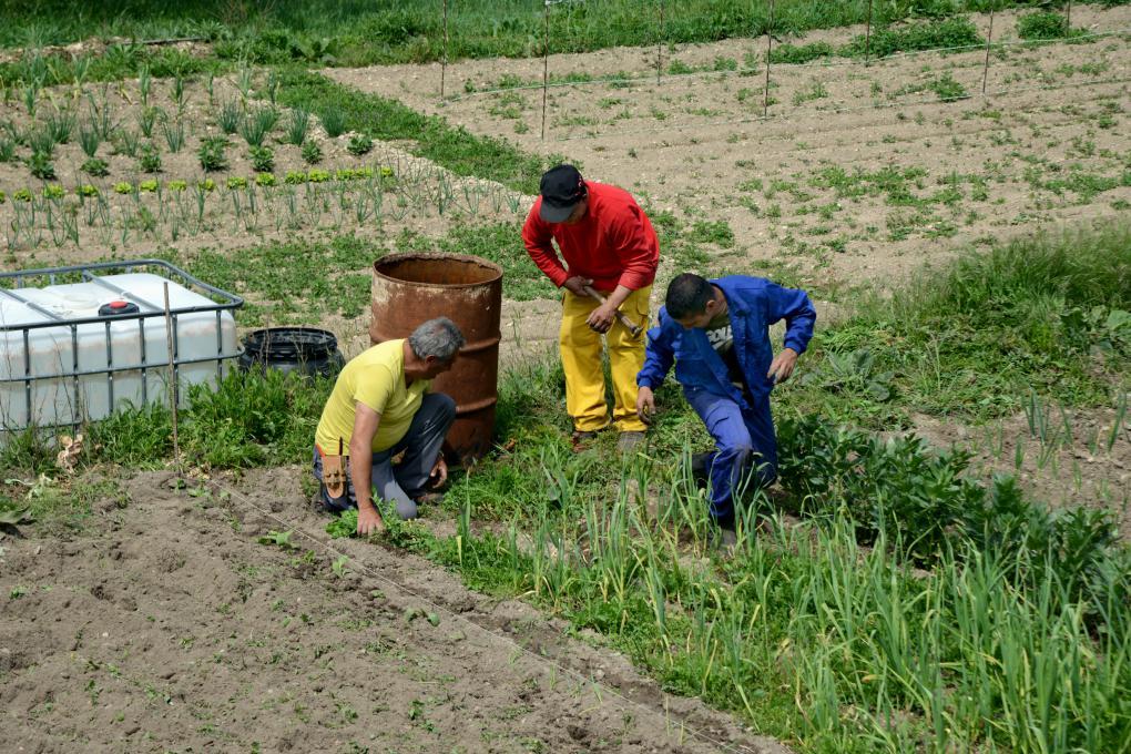 Agricultores plantando cebollas en el Valle de Sedano.
