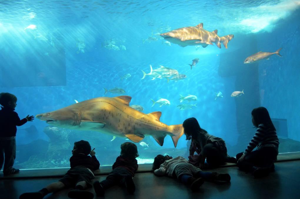 Tiburones en las piscinas del acuario. Foto: Acuario de Sevilla.