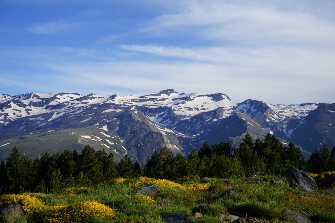 Ascenso al Mulhacén: Campos de piornos y bosques de pinos bajo el Pico Veleta