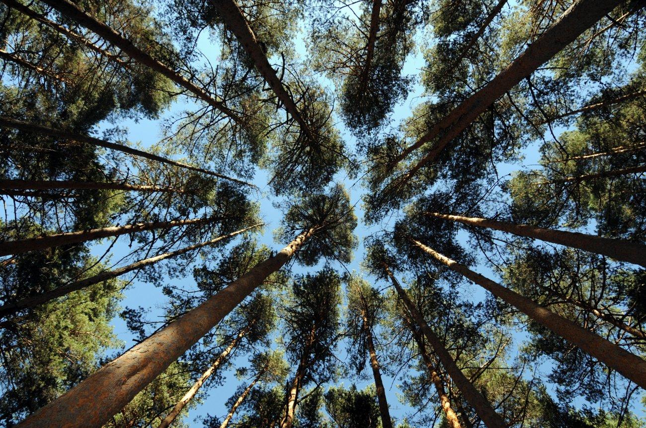 Parque Nacional de Guadarrama: Bosque de Valsaín