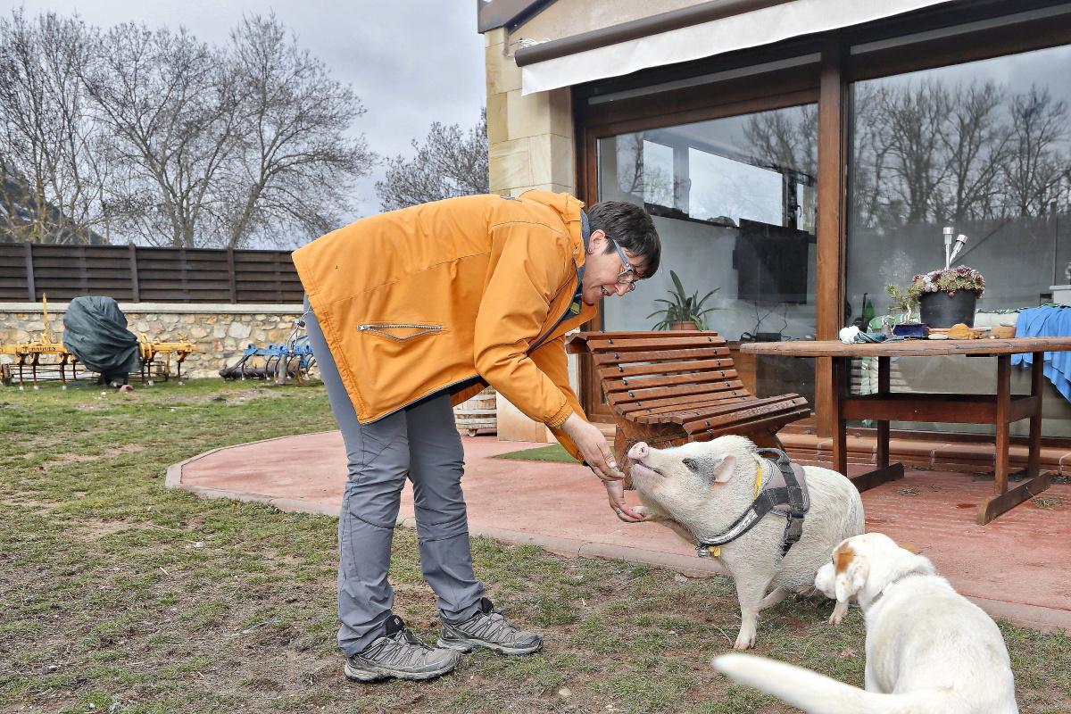 'Bulla' ha sido criada entre perros truferos y como un can más de la casa.