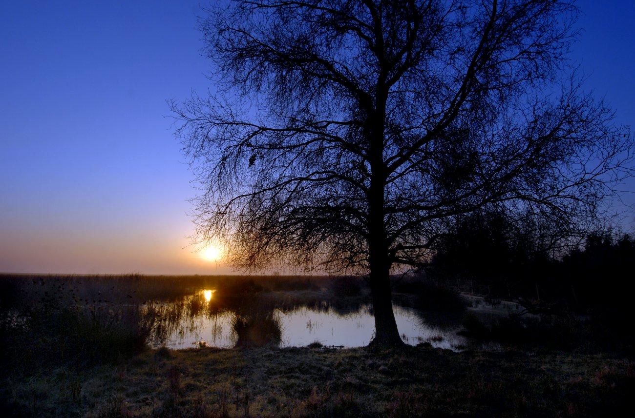 Parque Nacional Doñana: Amanecer en la marisma