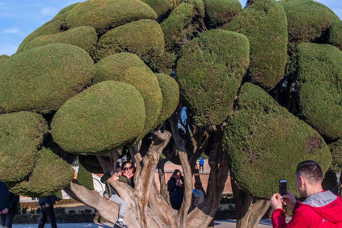 Los árboles esculturas del Parterre a menudo recuerdan que detrás hay artistas trabajándolos.