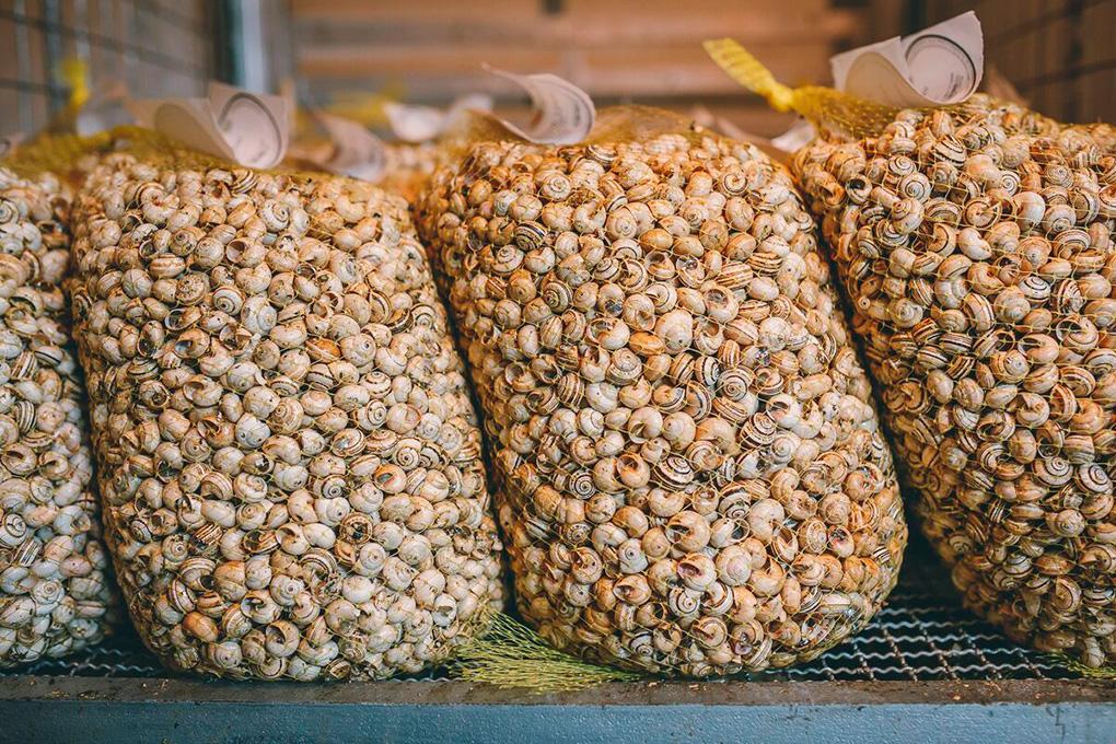En 'Caracolexpress' los compran en España vivos, los cocinan y los distribuyen.