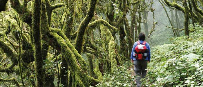 Excursionista en el Parque Nacional de Garajonay.