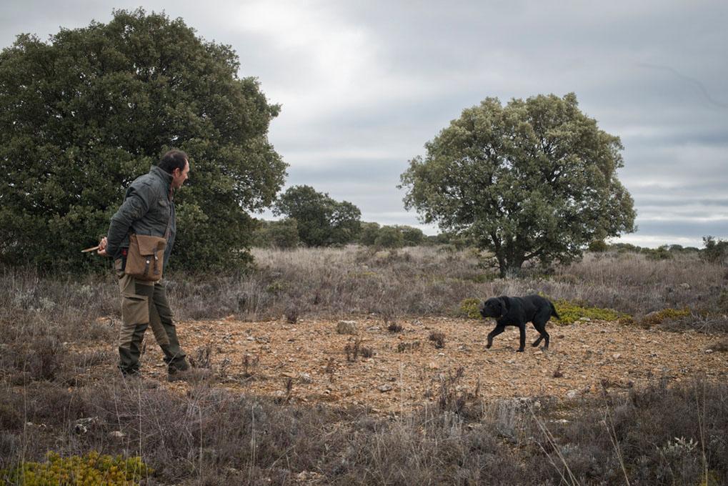 José Luis pasea por el monte junto a Pinto, un Golden negro con cruce de labrador de dos años.