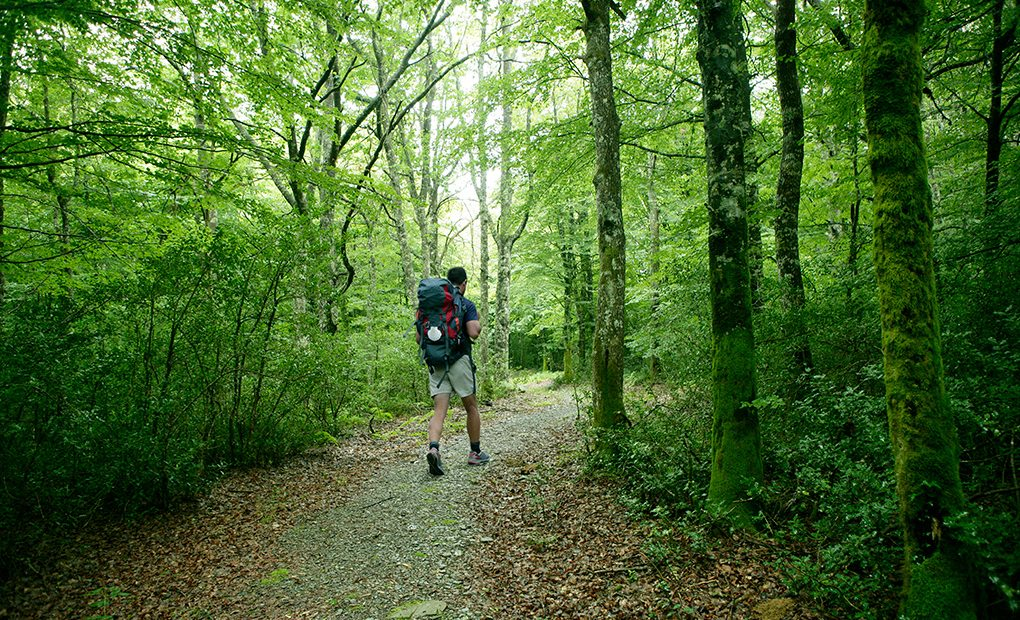 ¿Un paseo por el corazon de la Selva de Irati? Foto: shutterstock