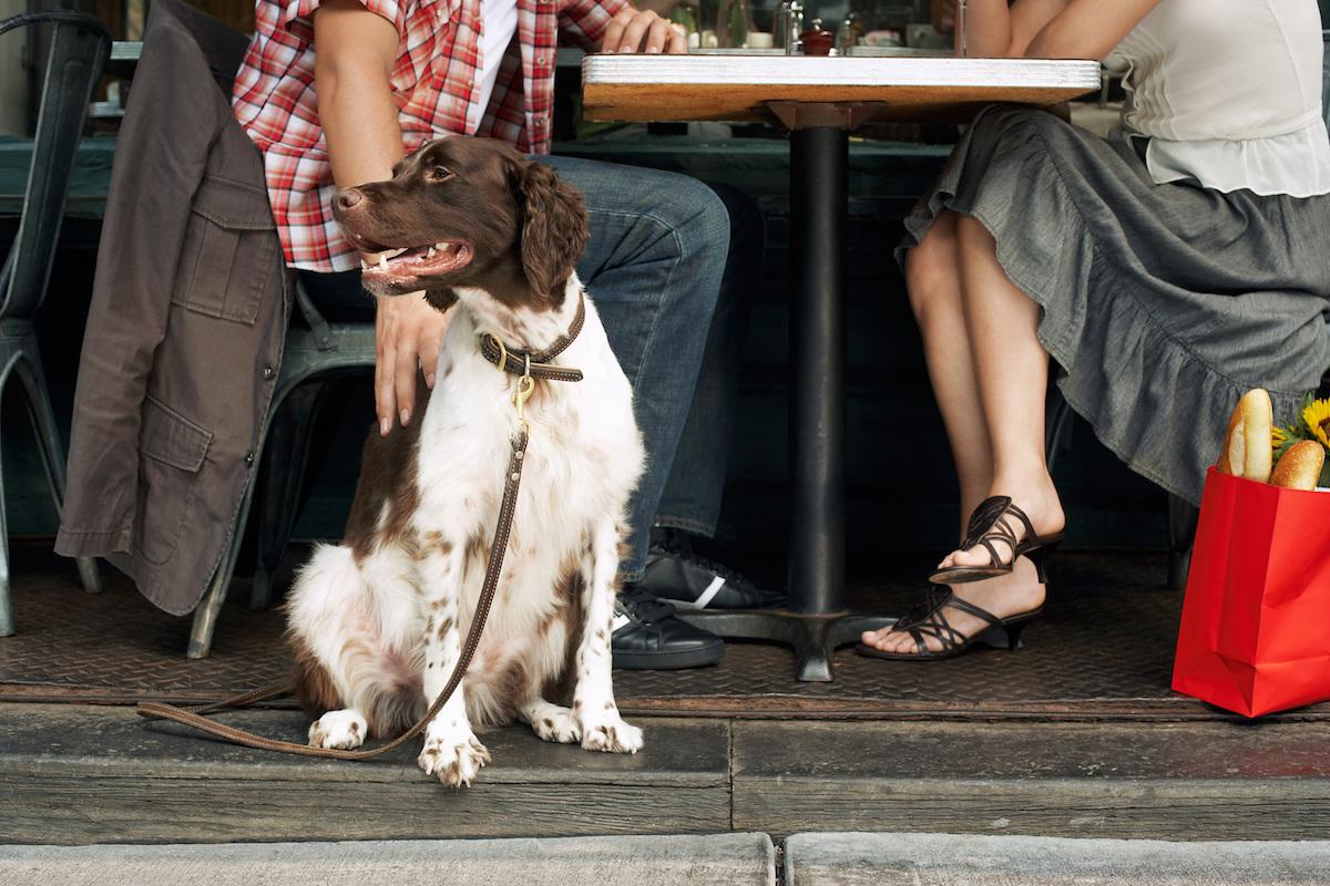 Perro en restaurante