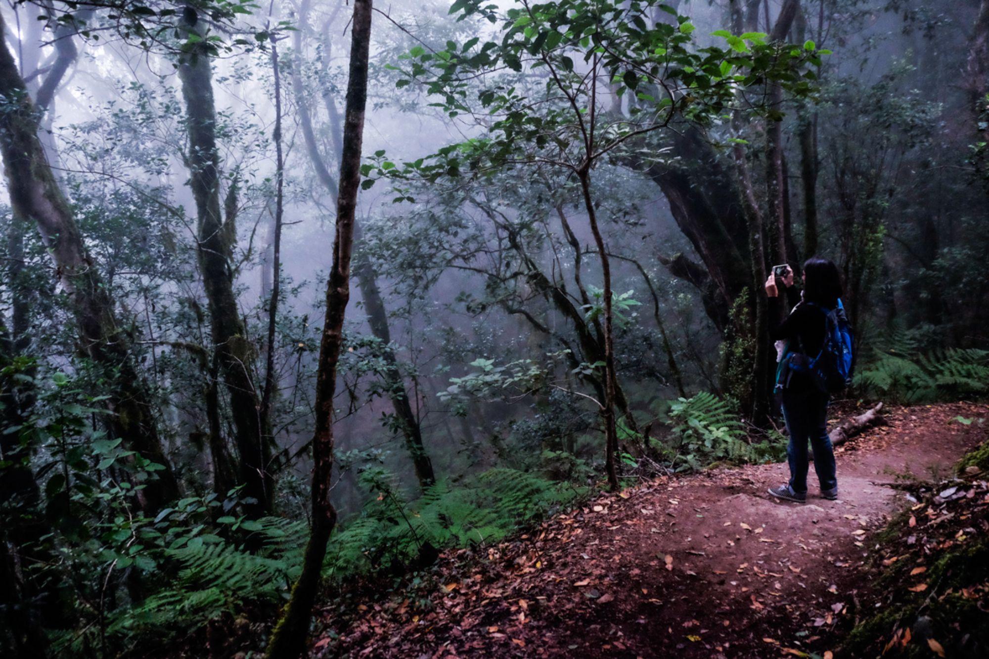 En el corazón de la Isla de La Gomera, en el parque nacional de Garajonay, los aquelarres eran frecuentes. Foto: Hugo Palotto.