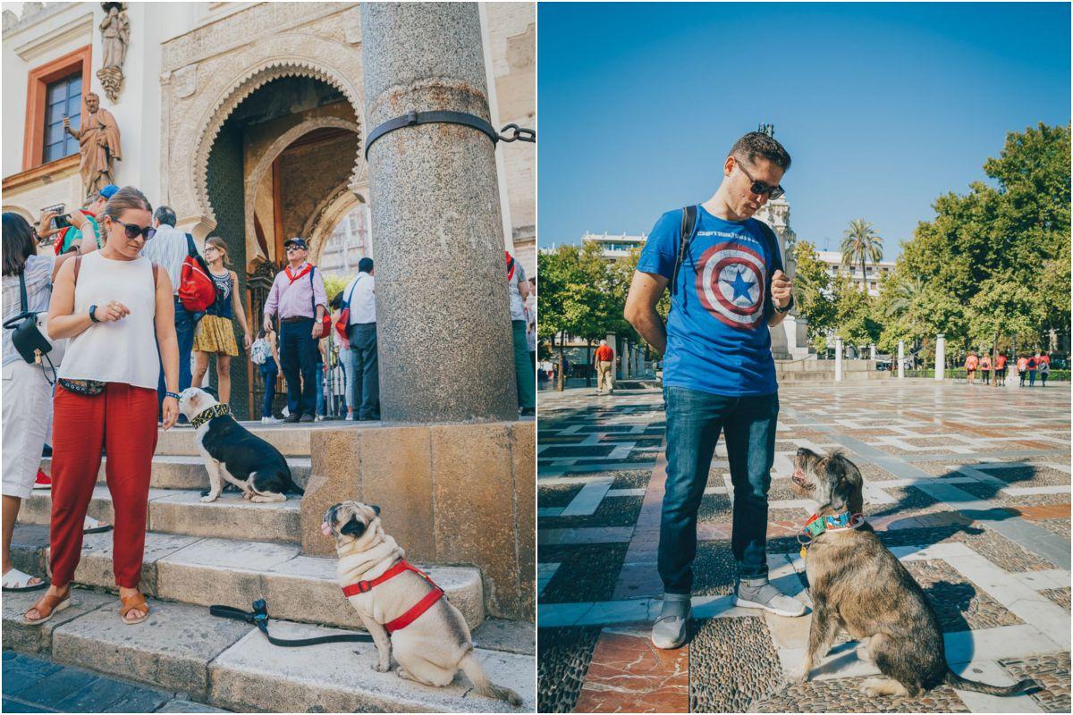 Sergio, el instructor, y su perra Jarta dan instrucciones junto a la catedral. Y dos de los participantes en el Patio de Banderas.