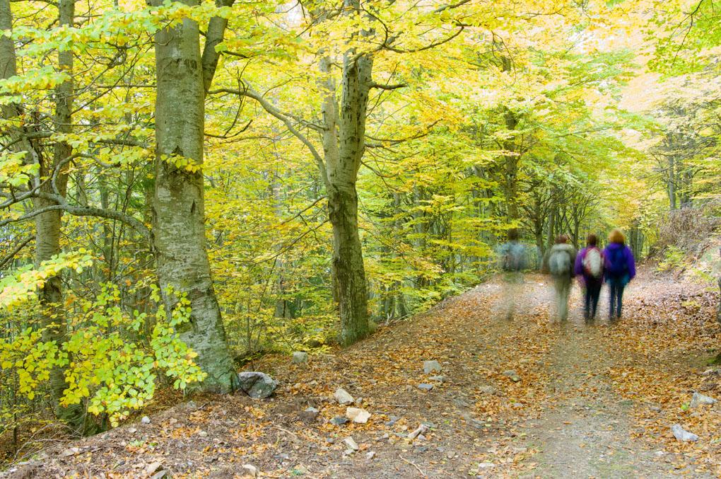 ¿Qué tal un paseo por el parque natural del Moncayo? Foto: shutterstock.