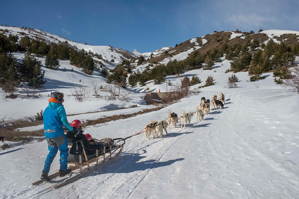 El 'musher' se comunica con los perros para determinar la ruta.