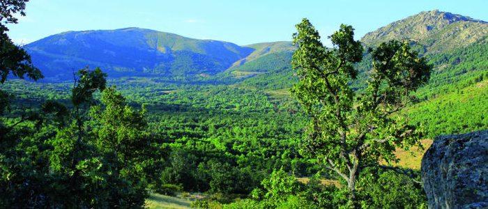 Alrededores de Miraflores de la Sierra.