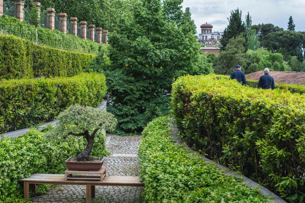 La terraza alta o de los laureles del Real Jardín Botánico de Madrid, donde se guarda la colección de bonsáis que donó Felipe González.