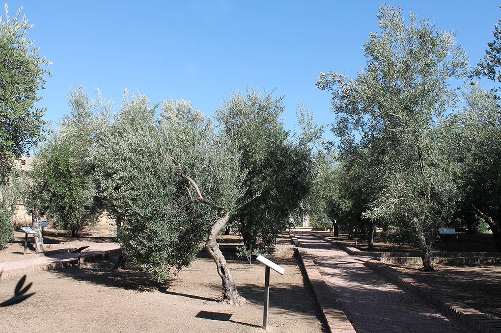 49 olivos, de 32 variedades distintas, conforman este 'jardín aceitunero'.  Foto: Edu Sánchez.