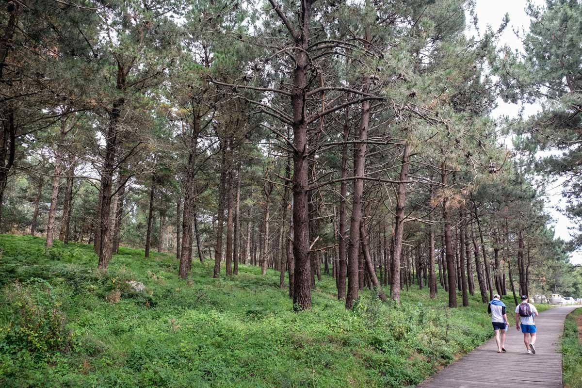 A la salida del Area da Secada un bosque de pino protege del sol a los visitantes.