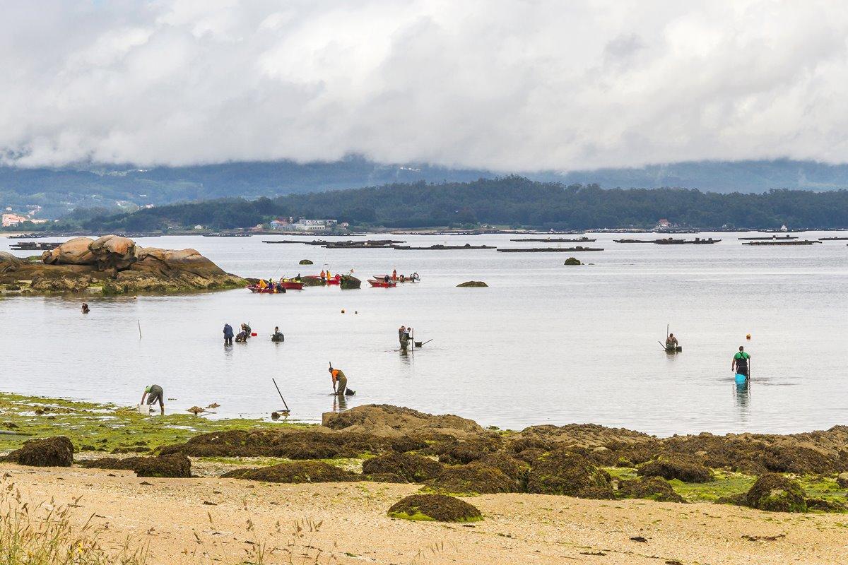 La pesca de mejillones es una de las actividades más representativas de Vilanova de Arousa. Foto: Shutterstock