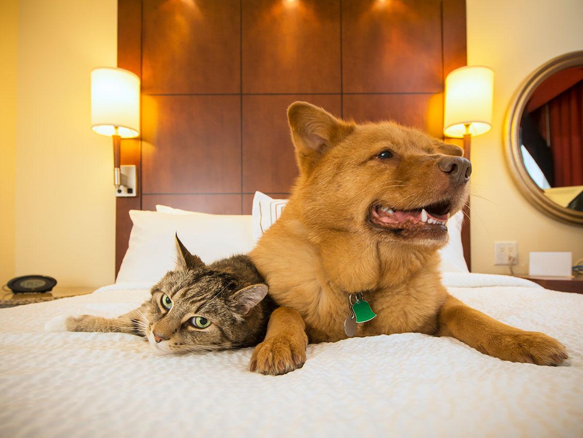 Infórmate si ellos también pueden dormir contigo. Foto: shutterstock