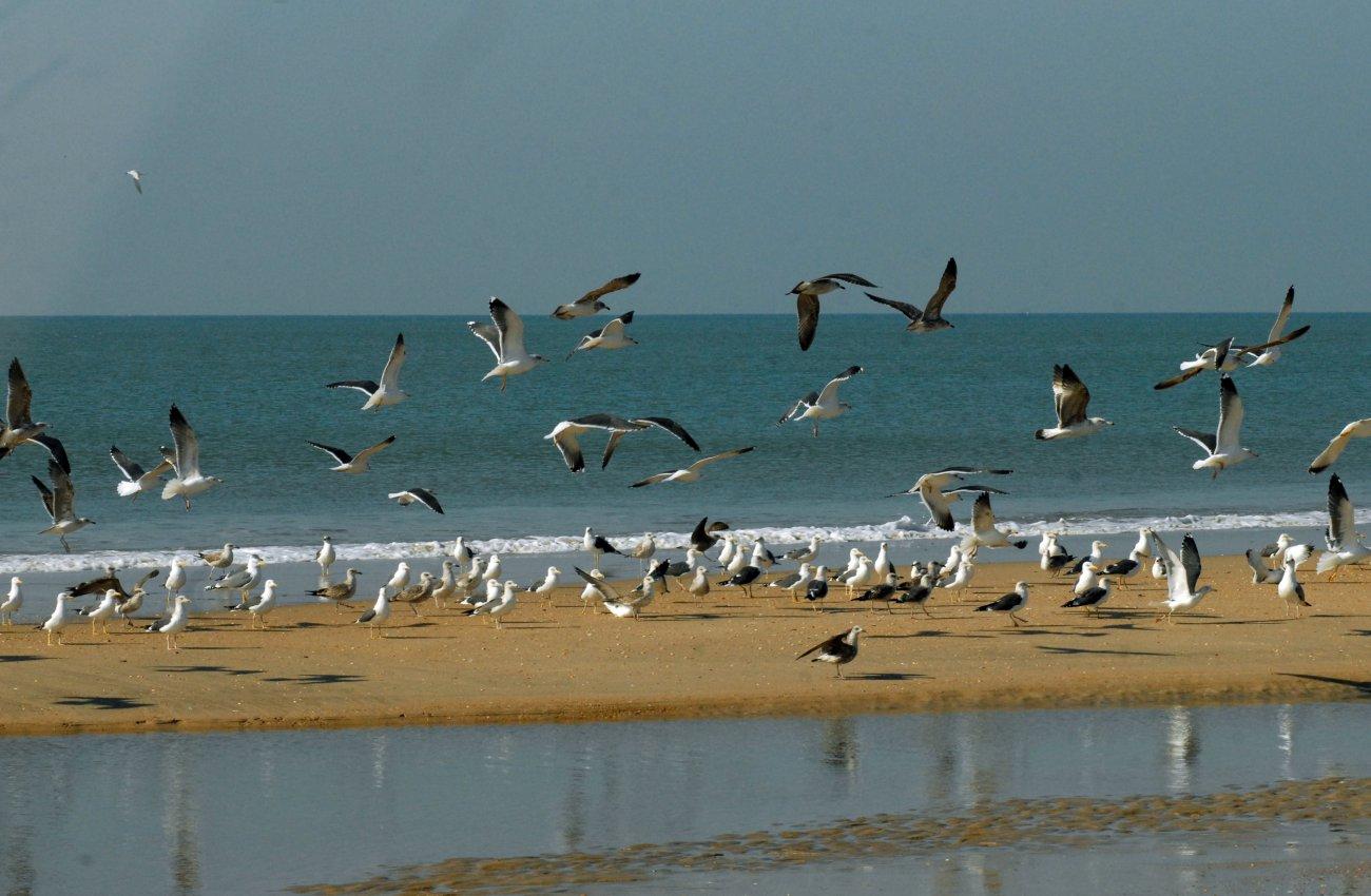 Parque Nacional Doñana: Bandada de gaviotas en la playa
