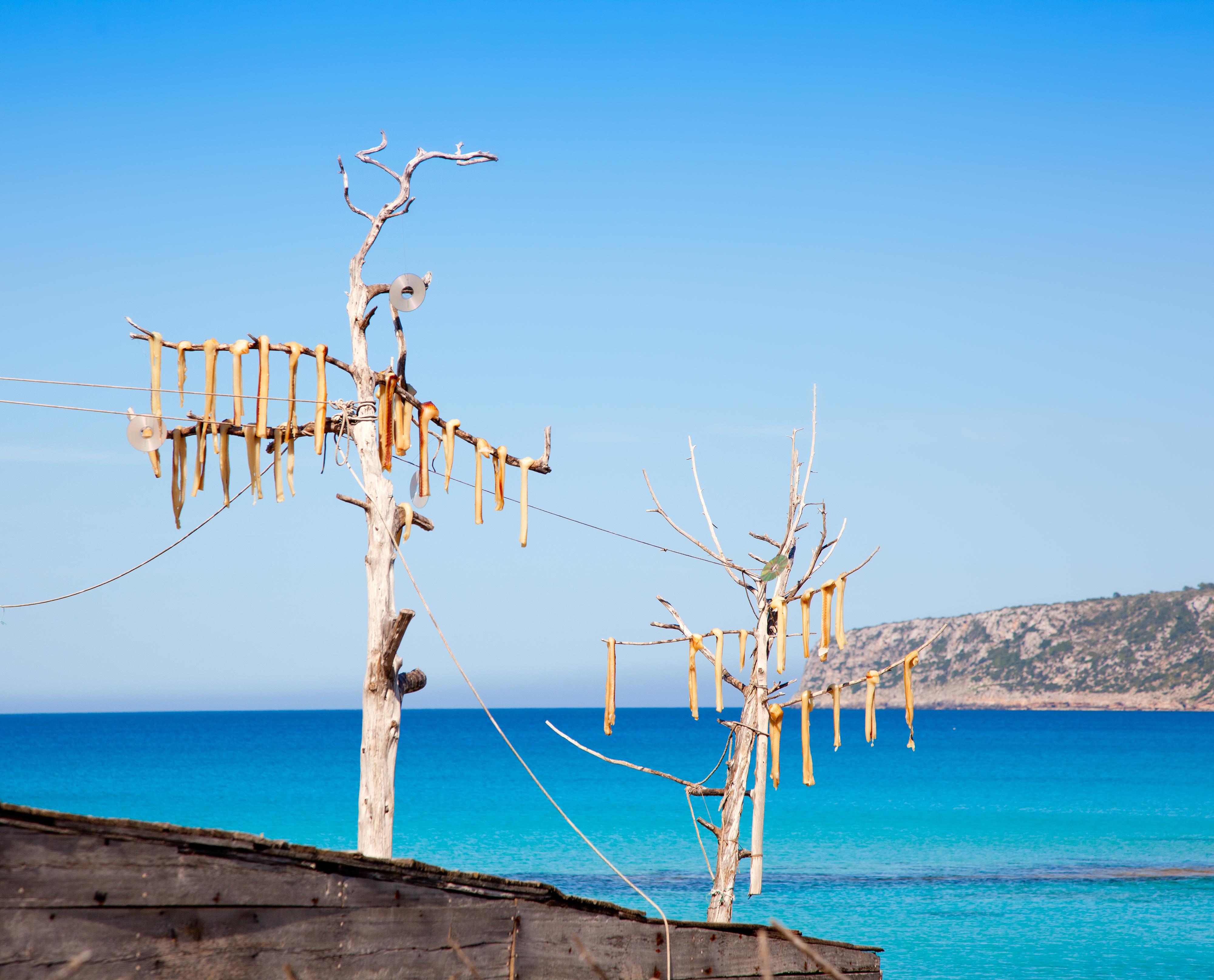Proceso de secado natural del pescado, a la brisa y al sol de Formentera. Foto: shutterstock.