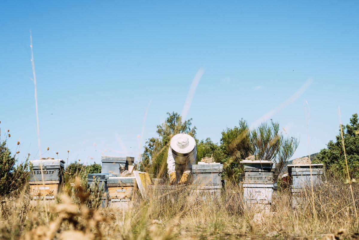 Un apicultor trabajando en las colmenas. Foto: Shutterstock.