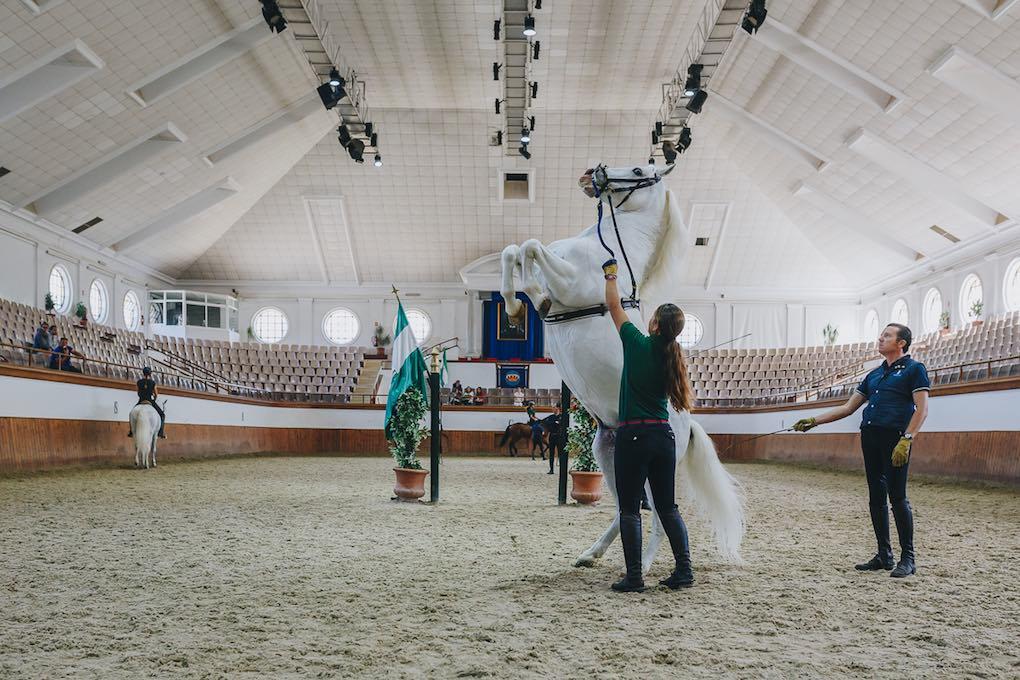 Preparando la exhibición 'Cómo bailan los caballos andaluces' en La Real Escuela Andaluza de Arte Ecuestre.