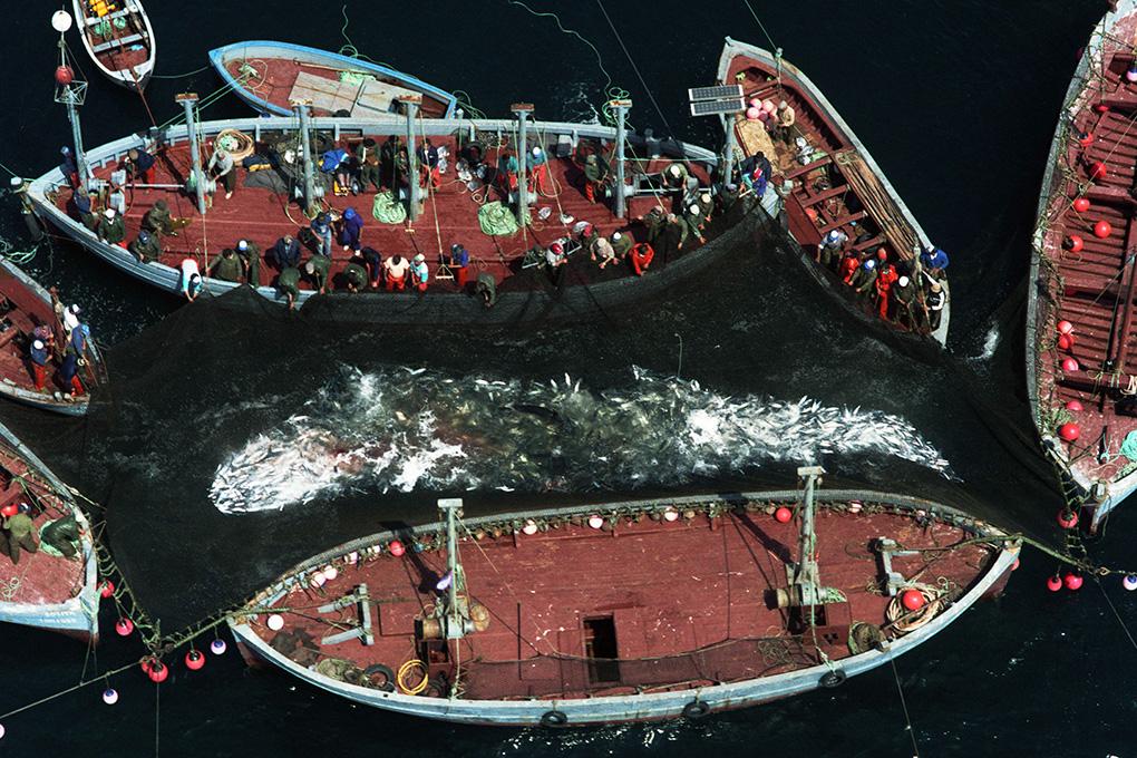 La relación de Tarifa con el mar y con la pesca viene de lejos. Foto: M. Rojas.