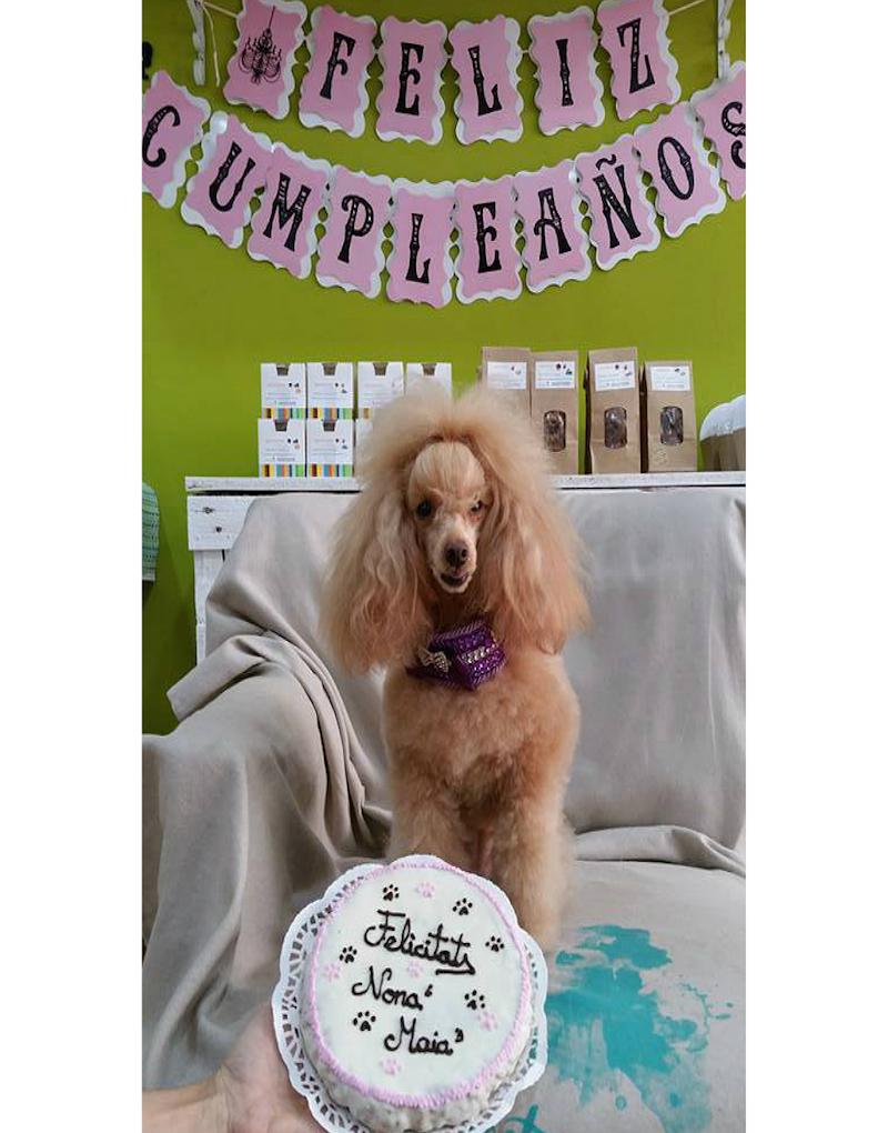 ¡Los cumpleaños son lo mejor!  Foto: Snouts.