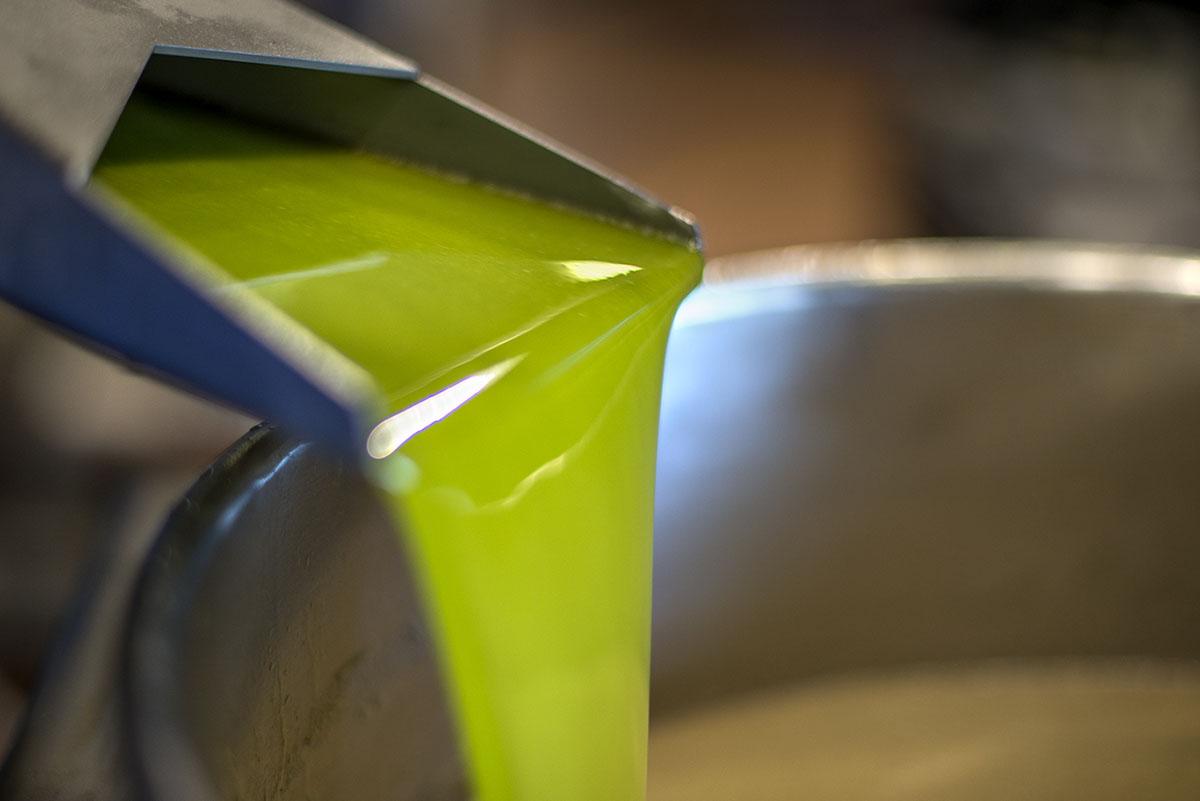 El proceso de molturación es idéntico al del aceite de oliva de Cosecha Temprana.