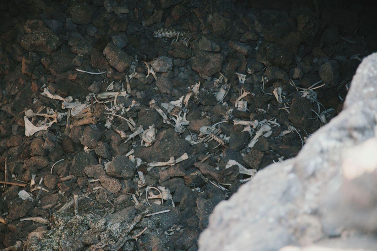 En la Cueva de los Burros, los restos de estos animales aún pueden verse.