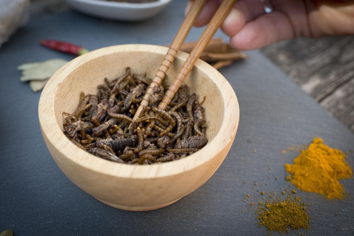 Un cuenco de larvas de escarabajo.