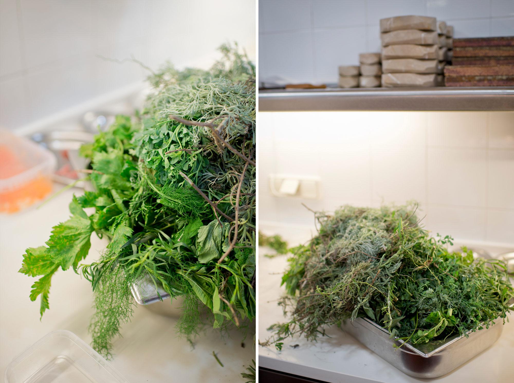 Ruda, artemisa, hierbaluisa, melisa, hinojo… las hierbas recién cortadas del huerto.