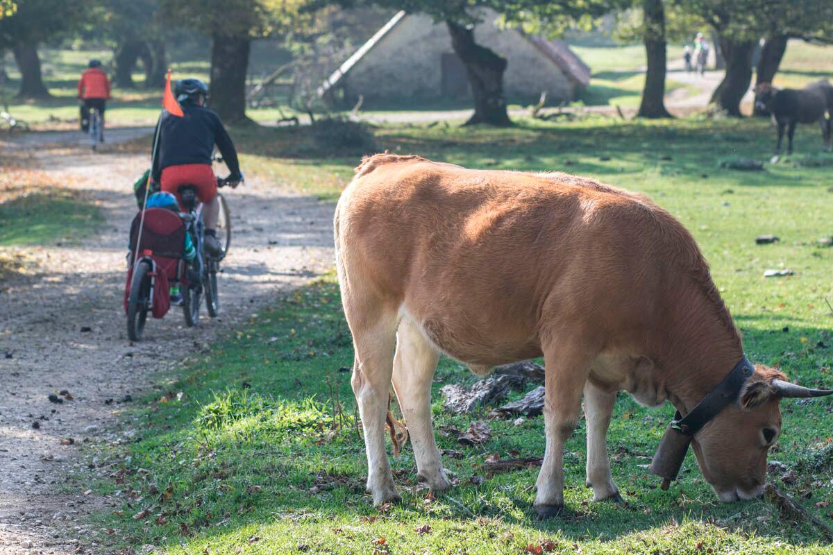 Urbasa: El entorno es perfecto para los peques. Foto: Pekebikers
