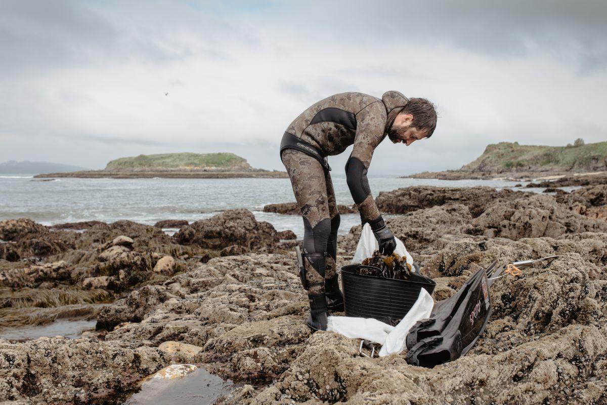 Alberto, de 'Conservas de Mar de Ardora' transvasa las algas del cesto al saco, en Galicia.