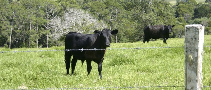 La ganadería es el motor económico de Colmenar Viejo.