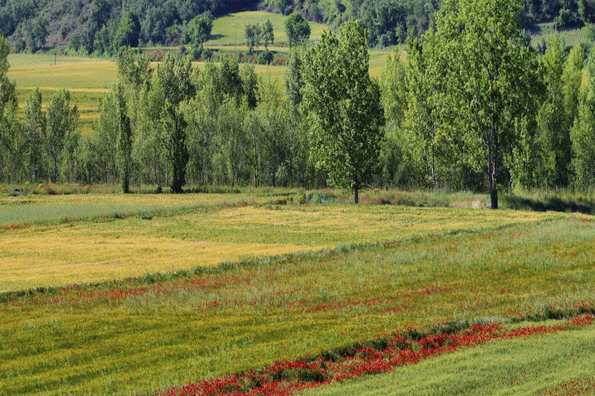 Campo de cereales en Lleida