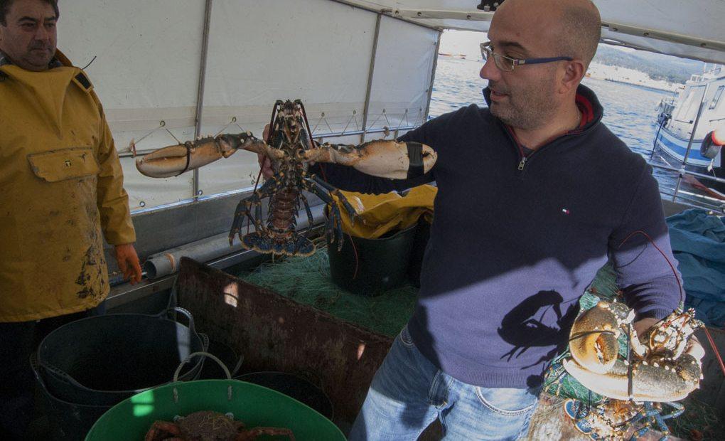 Captura artesanal del bogavante, uno de los mariscos más apreciados de Galicia. Foto: Artesans da Pesca.
