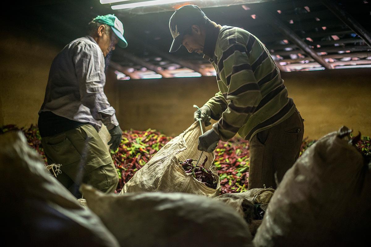 Ángel Nevado, junto a otro agricultor, extiende los pimientos recién llegados de la tierra.