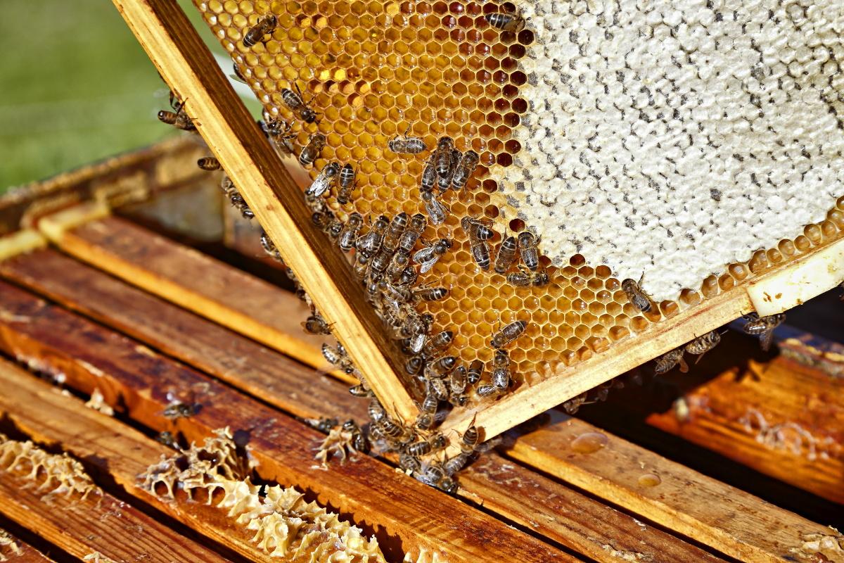 Detalle de un panel de abejas produciendo miel