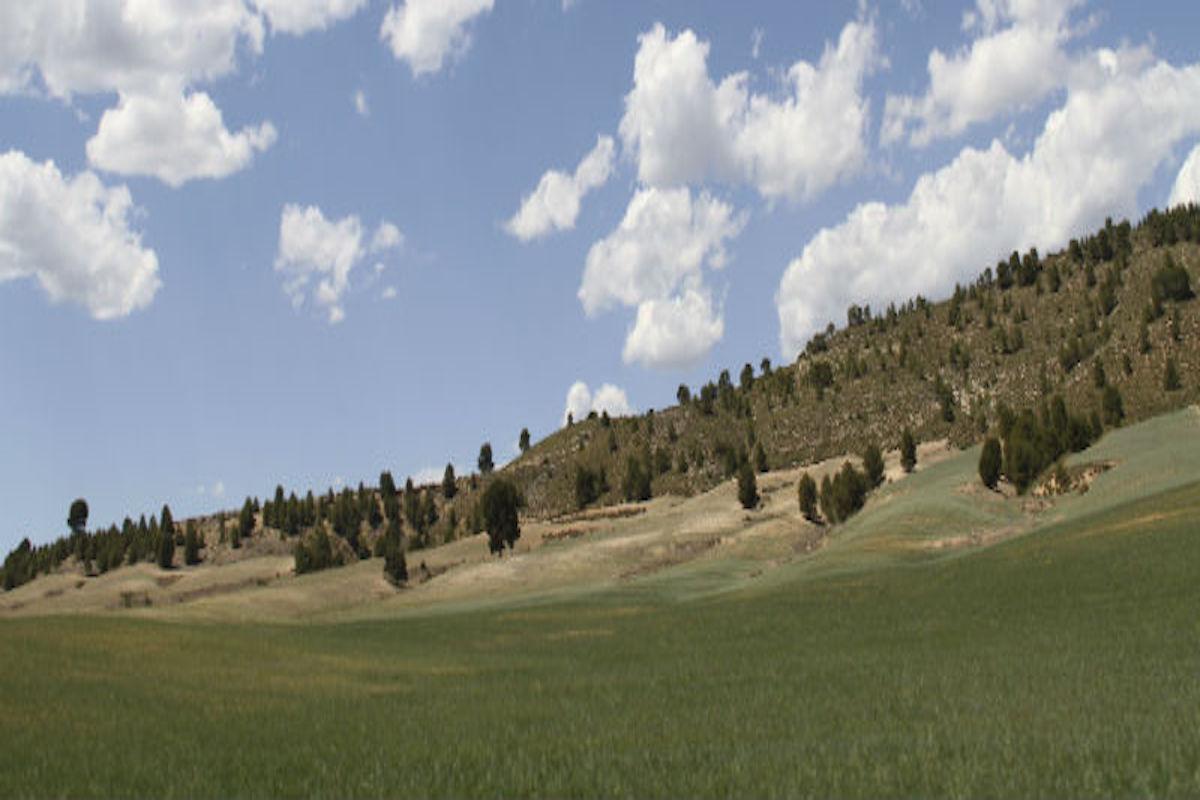 Campo en las afueras de Moratalla.