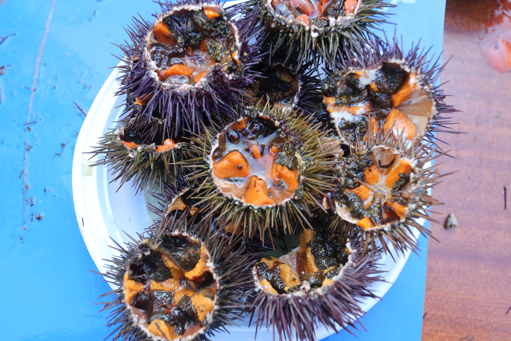 Primer plano de un plato de erizos de mar. Foto: Manuel Fernández.